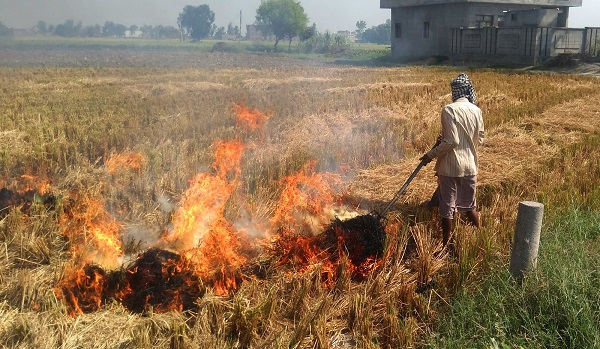 Bengal looks at alternatives after banning stubble burning